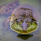 Frog Eyes by Mikell Herrick