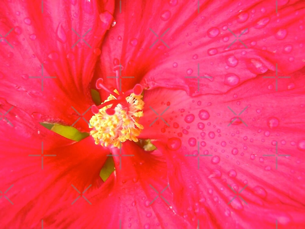 Hibiscus by Shulie1
