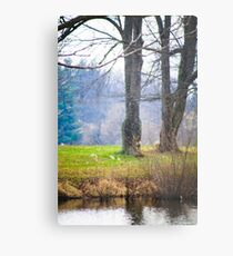 ANOTHER DAY AT THE POND Metal Print