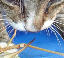 Close Up of A Tabby Cat and Katydid Sticker