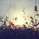 sprig scape by Rebecca Tun