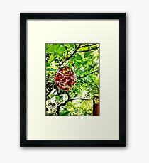 Glass Globe in the Garden Framed Print