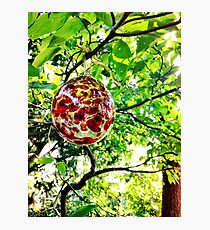 Glass Globe in the Garden Photographic Print