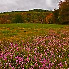 Wildflowers in Autumn by Lisa Putman