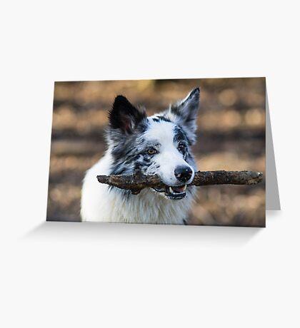 Stick Merle Greeting Card