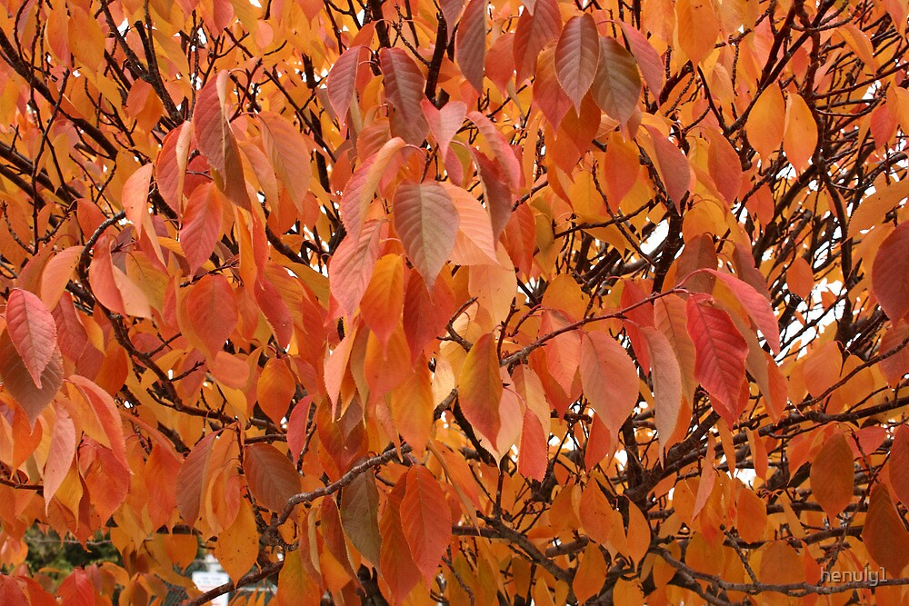 Fall Leaves by henuly1