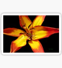 Red and Yellow Lily Sticker