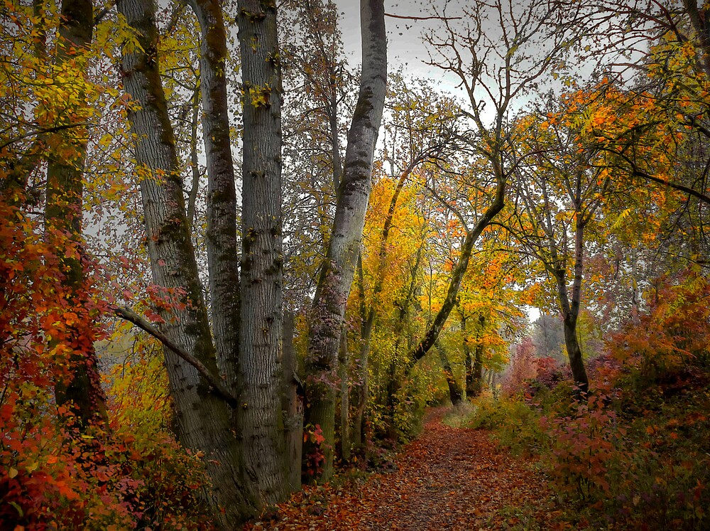 Takena Trail ~ Fall Colors ~ by Charles & Patricia   Harkins ~ Picture Oregon