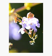 Sun Sparkle Photographic Print