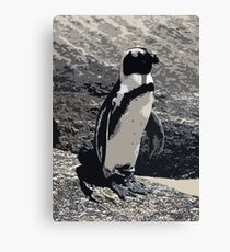 African Penguin Portrait Canvas Print