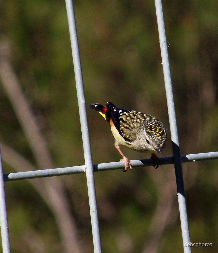 Pretty Little Bird.. by debsphotos