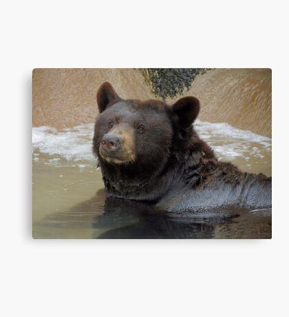 Bathing Black Bear Canvas Print