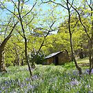 Lafranchi's Hut....somewhere in Central Victoria by Helen Greenwood