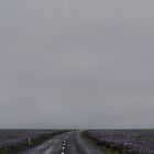 Foggy road between Lupines by gantico