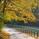 Grist Mill Road by Douglas  Stucky