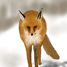 Red Fox - Drawn of the iPad by Ray Cassel