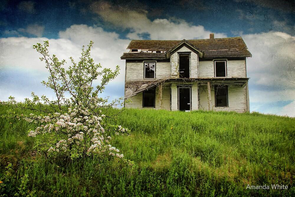 Beauty & The Blossom by Amanda White