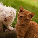 Friends? by liza1880