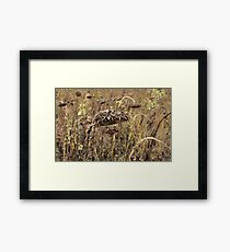 Dried Sunflower Framed Print