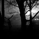 Foggy Night by Sam Davis