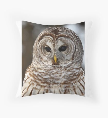 Barred Owl closeup Throw Pillow