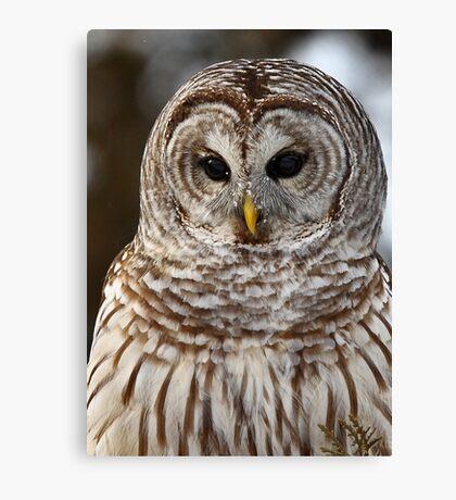 Barred Owl closeup Canvas Print