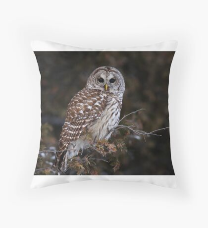 Barred Owl - Kanata Throw Pillow
