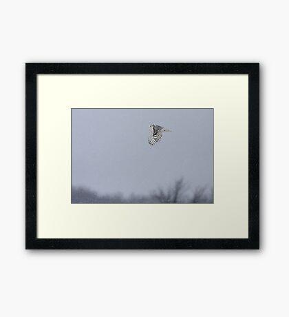 Snowy owl...high above the treetops Framed Print