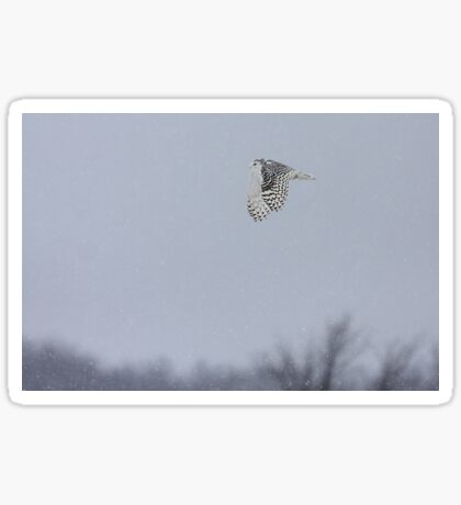 Snowy owl...high above the treetops Sticker