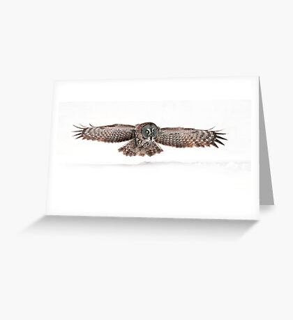 Silent Hunter - Great Grey Owl Greeting Card