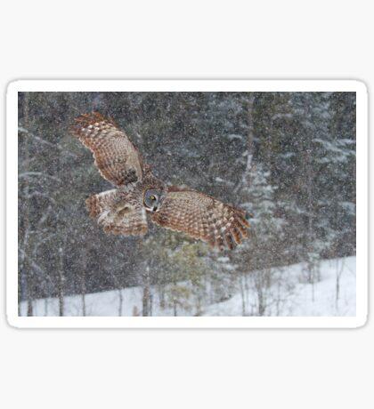 Through the Snow - Great Grey Owl Sticker
