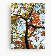 Autumn Color at Sheldon Marsh Canvas Print