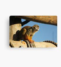 Squirrel Monkey - Yorkshire Wildlife Park Canvas Print
