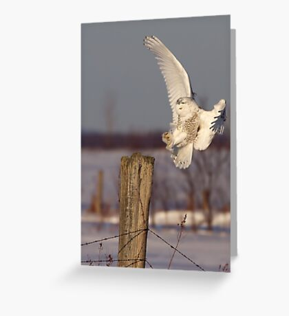 Snowy Owl on post Greeting Card