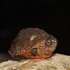 Loggerhead Musk Turtle by Michael L Dye