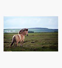 Icelandic Pony Photographic Print