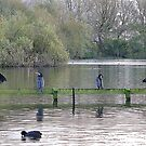 4 Cormorants and a Coot. by Lilian Marshall