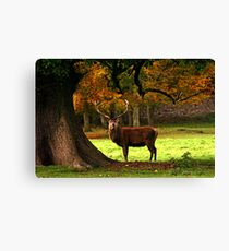 Fountains Abbey Stag Canvas Print