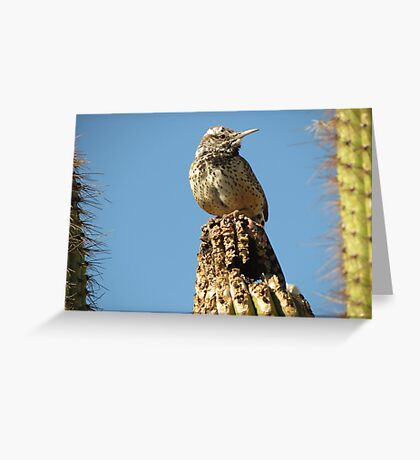 Cactus Wren on Lookout Greeting Card