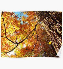 Autumn in New York  Poster