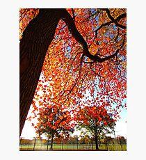 Autumn at Pelham Bay Park Photographic Print