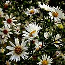 Freedom of Wildflowers by paintingsheep