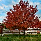 Colors of fall by Penny Fawver