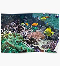Underwater Colourful Tropical Fish Poster