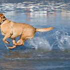 Aqua-Lab at speed. by supersnapper