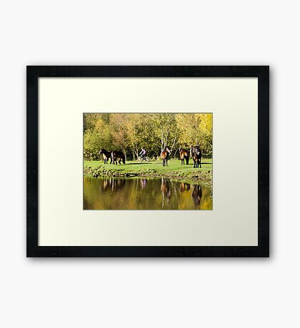 Ponies in the Park Framed Print