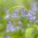 Memories of Spring by Kasia Nowak