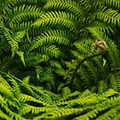 Tree Fern by Paula McManus