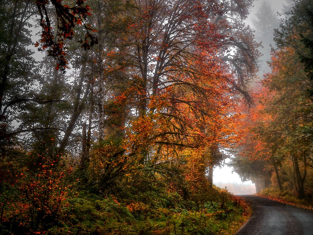 The Last Fall Day ~ Fall Colors ~ by Charles & Patricia   Harkins ~ Picture Oregon