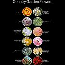 Country Garden Flowers  by CountryGardens